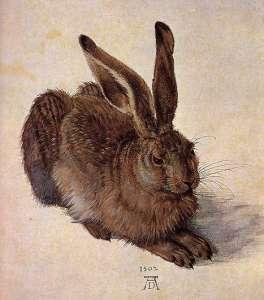 """""""A Young Hare, Albrect Durer"""" by Albrecht Dürer"""